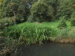 Storchenwiese (Vogelpark Herborn)