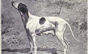 Braque Dupuy (W. E. Mason)