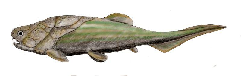 Coccosteus cuspidatus (© N. Tamura)