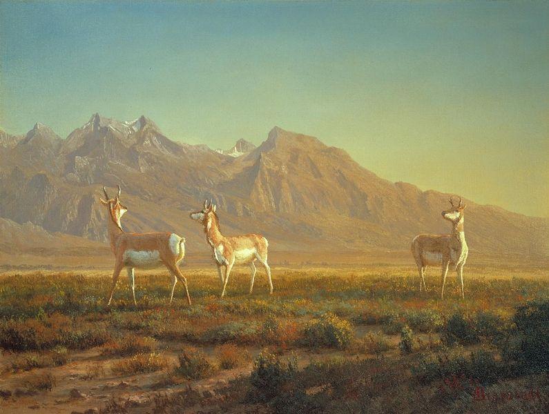 Gabelböcke (Albert Bierstadt)