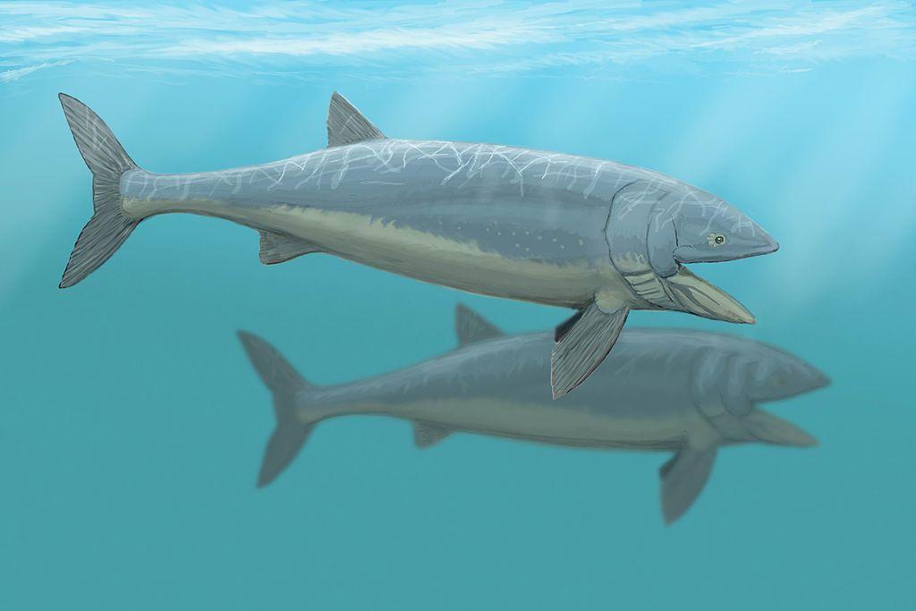 Leedsichthys problematicus (Dmitry Bogdanov)