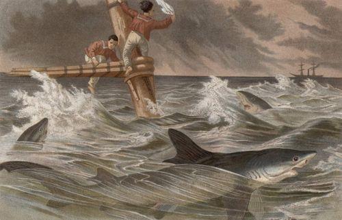 Blauhai (Brehms Tierleben)