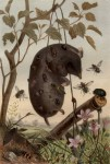 Aasinsekten an einem Maulwurf