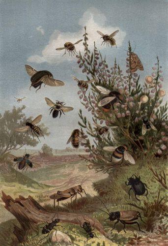 Insektenleben am Heidekraut