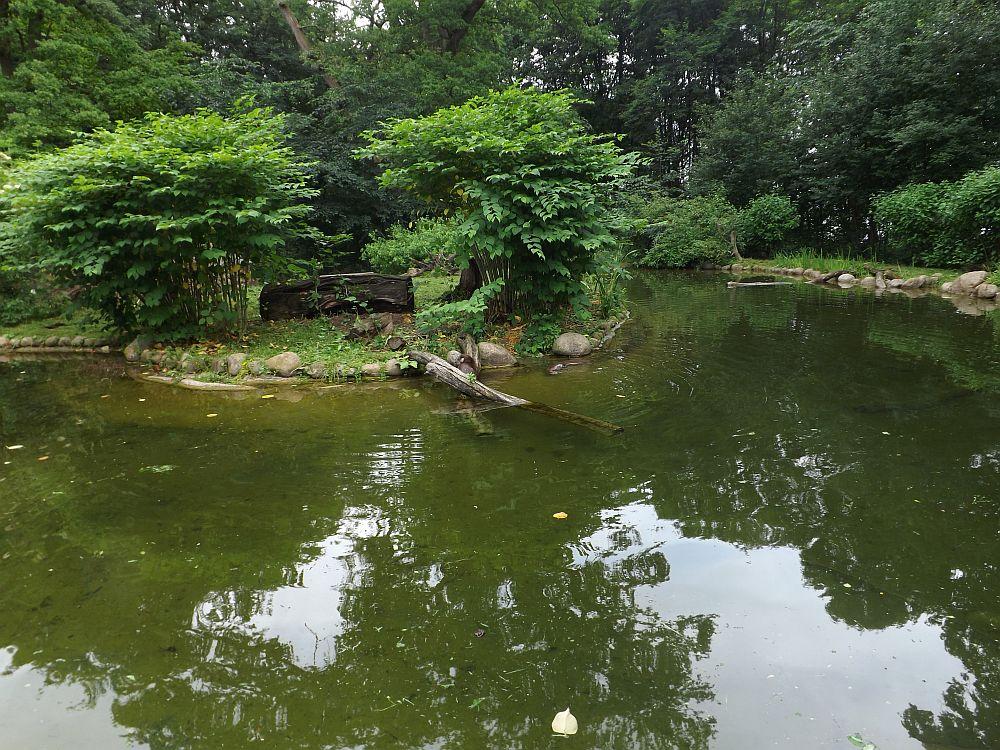 Fischotteranlage (Zoo Schwerin)