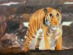 Goldener Tiger