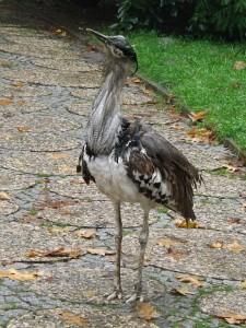 Koritrappe (Weltvogelpark Walsrode)