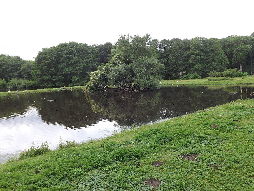 Teich (Zoo Schwerin)