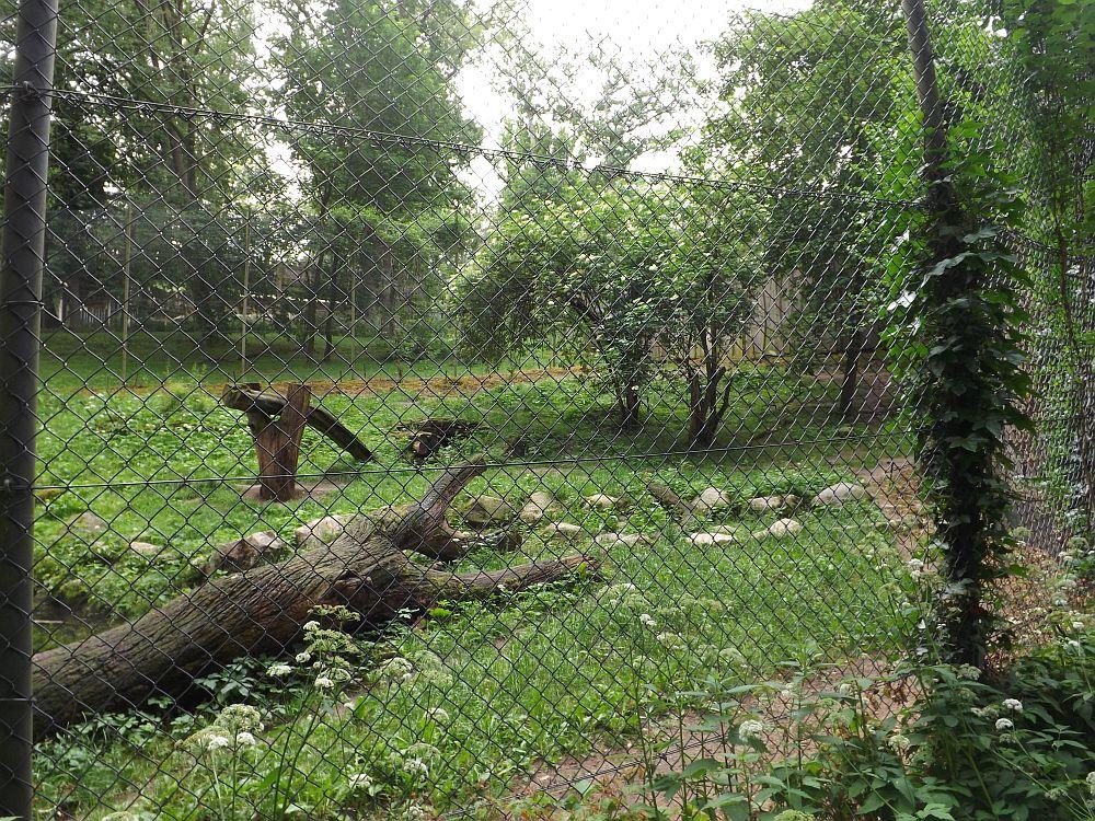 Tigeranlage (Zoo Schwerin)