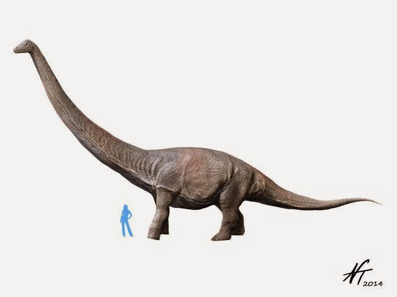 Dreadnoughtus schrani (© N. Tamura)