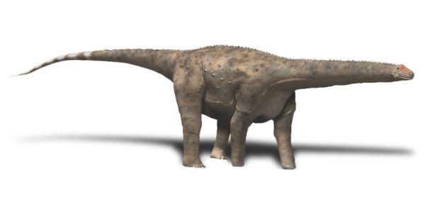 Hypselosaurus priscus (© N. Tamura)