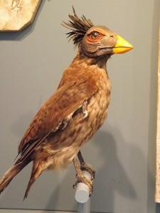 Confuciusornis sanctus (Jura-Museum Eichstätt)