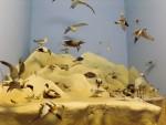 Diorama: Nordseeküste (Hessisches Landesmuseum)