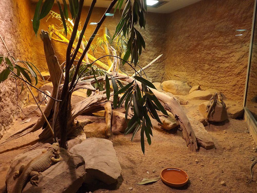 Australienterrarium (Reptilium Landau)