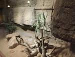 Offenes Terrarium für Rote Teju (Reptilium Landau)