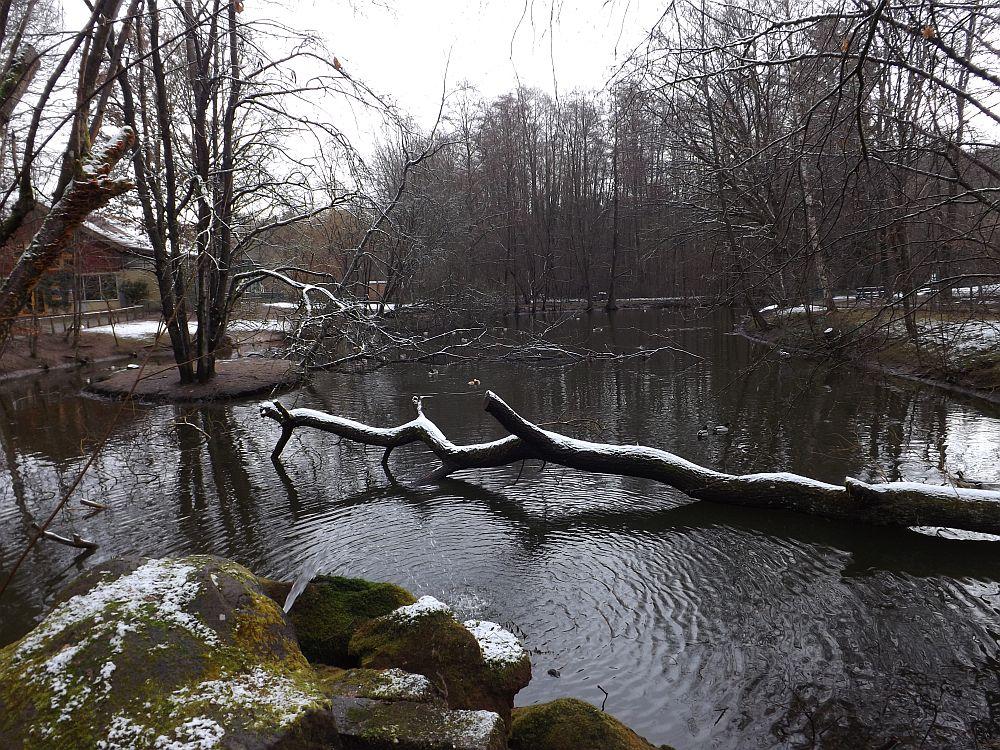 Teich (Zoo Kaiserslautern)