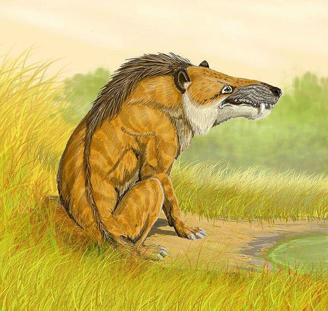 Andrewsarchus mongolensis (Dmitry Bogdanov)