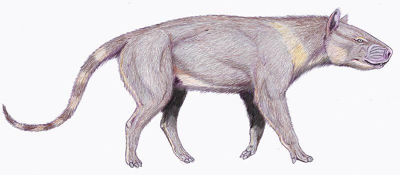 Synoplotherium vorax (Dmitry Bogdanov)