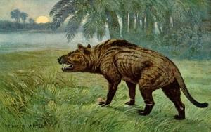 Hyaenodon (Heinrich Harder)