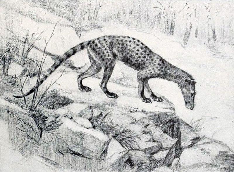 Tritemnodon agilis (Robert Bruce Horsfall)