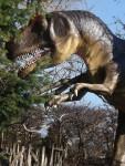 Allosaurier (Urweltmuseum Hauff)