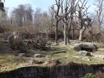 Anlage für Nasen- und Brillenbären (Zoo Zürich)