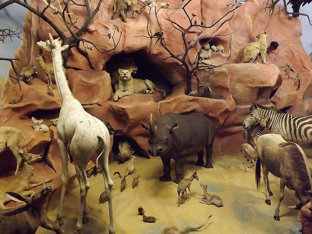Afrika (Hessisches Landesmuseum Darmstadt)