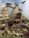 Alpen (Hessisches Landesmuseum Darmstadt)