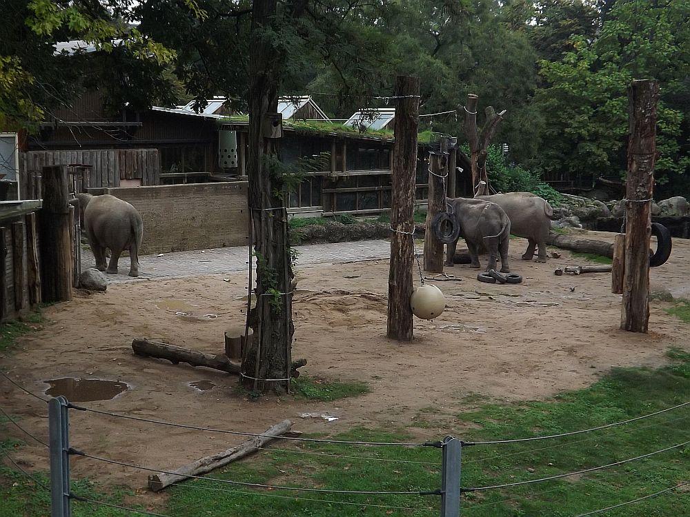 Elefantenanlage (Zoo Karlsruhe)