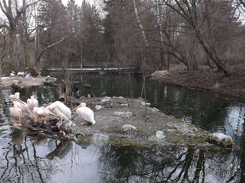 Pelikanweiher (Tierpark Hellabrunn)