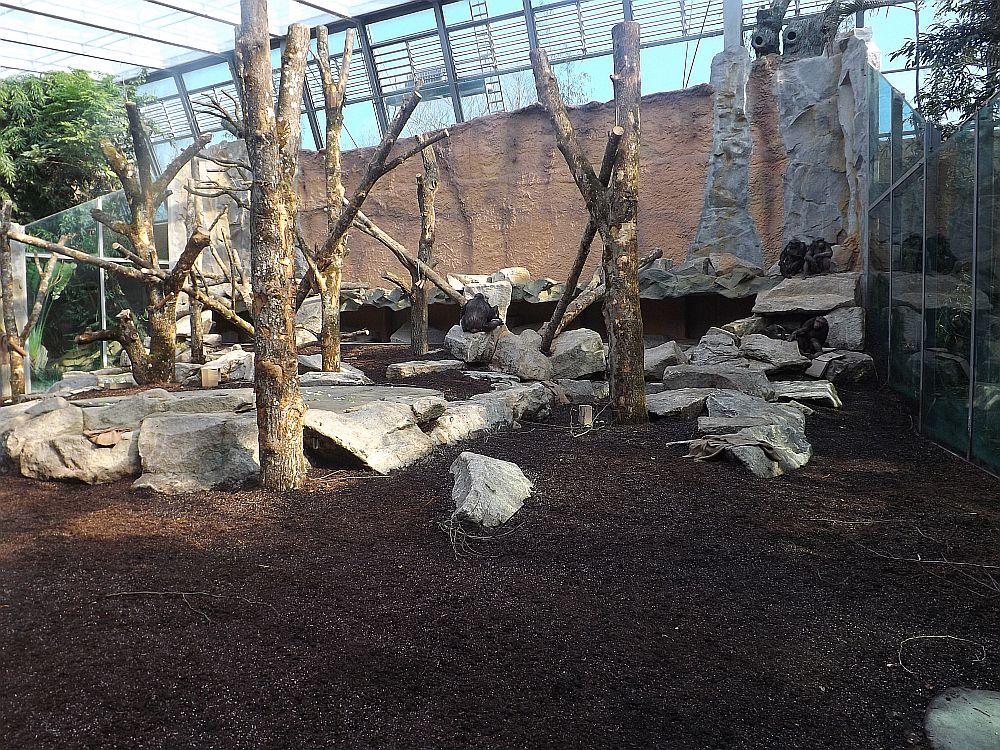 Innenanlage der Schimpansen (Tierpark Hellabrunn)