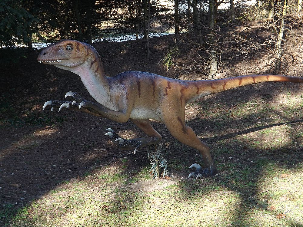 Velociraptor (Urweltmuseum Hauff)