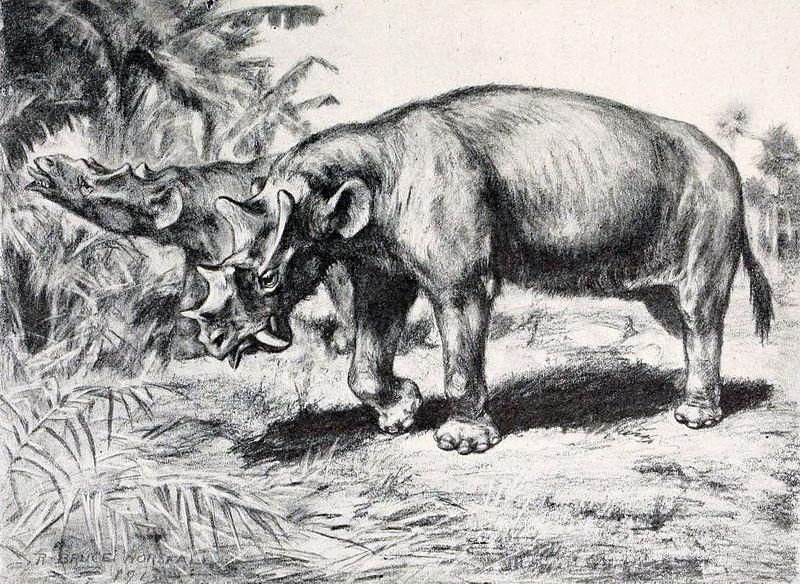 Uintatherium (Robert Bruce Horsfall)