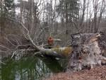 Ein umgestürzter Baum, bedingt durch den Orkan Niklas