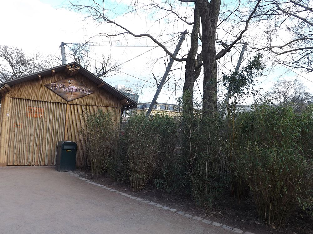 Flamingolabgune (Zoo Leipzig)