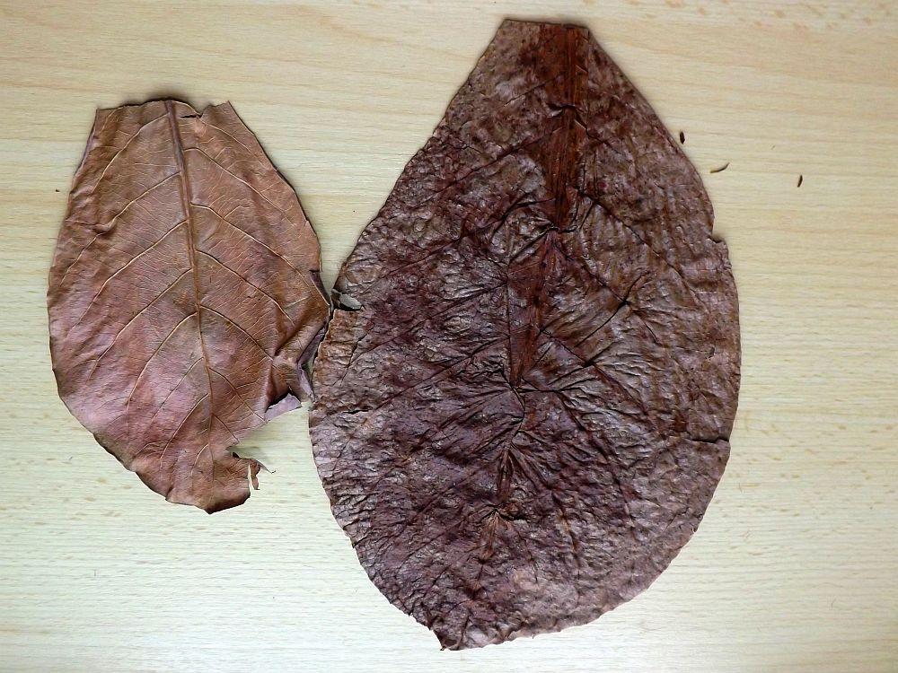 Smandelbaumblätter. links die neue Lieferung, rechts die alte