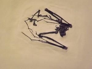 Palaeochiropteryx tupaiodon (Hessisches Landesmuseum Darmstadt)