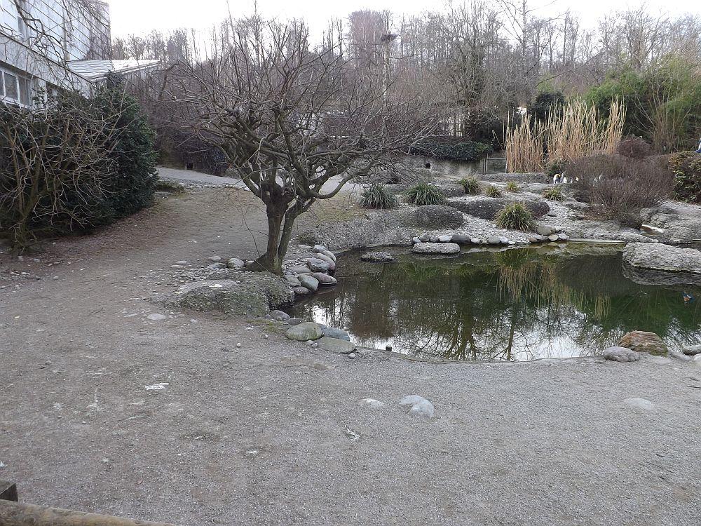 Pinguinanlage (Zoo Zürich)