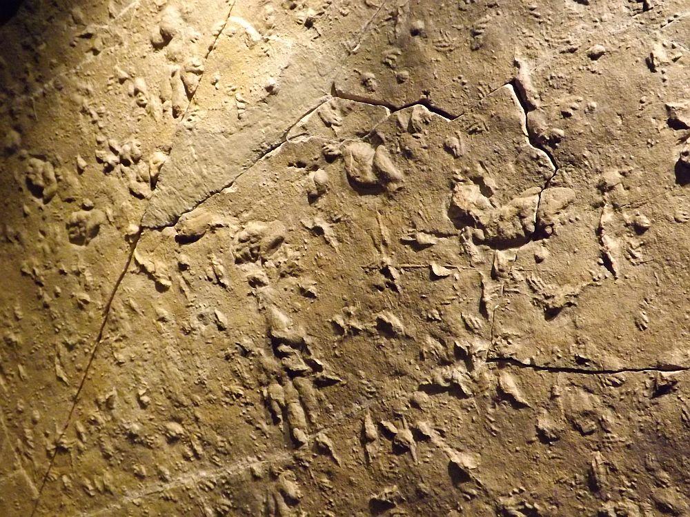 Saurierfährten (Urzeitmuseum Oberfranken)