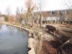Transpantaneira (Zoo Zürich)
