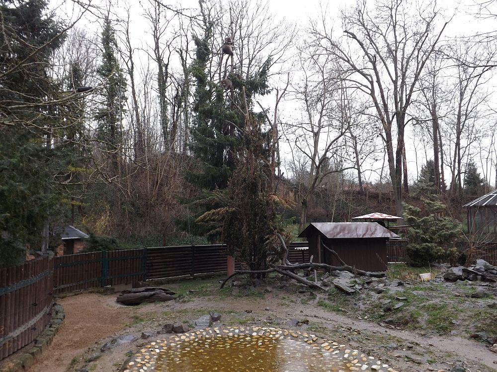 Waschbärenanlage (Heimatnaturgarten Weißenfels)