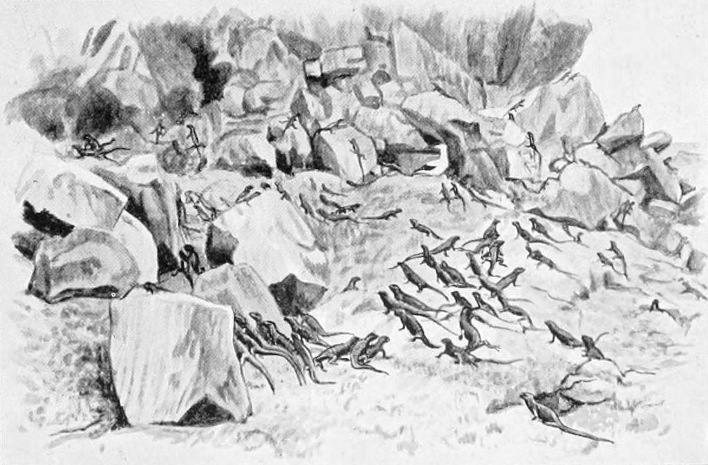 Meerechsen (Frederick William Frohawk)