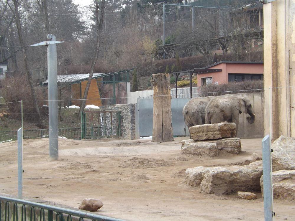 Altes Elefantenhaus (Thüringer Zoopark)