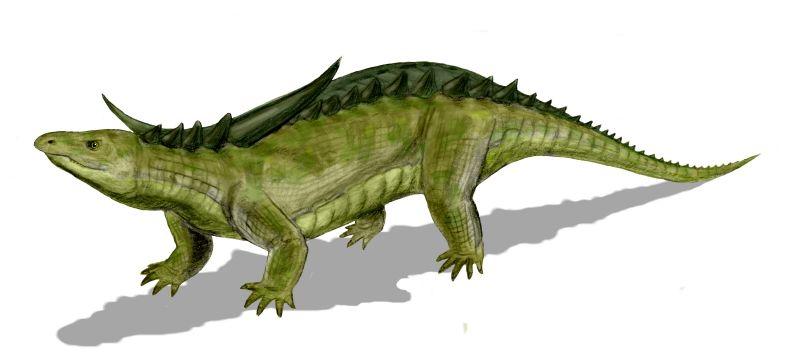 Desmatosuchus haplocerus (© N. Tamura)