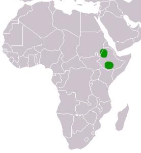 Verbreitung des Äthiopischen Wolfs