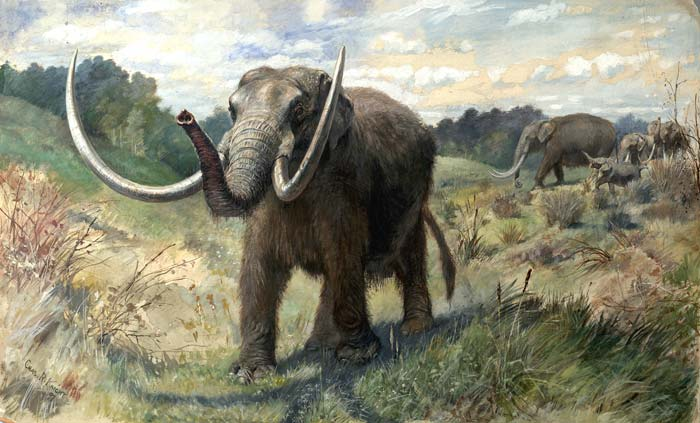 Amerikanisches Mastodon (Charles R. Knight)