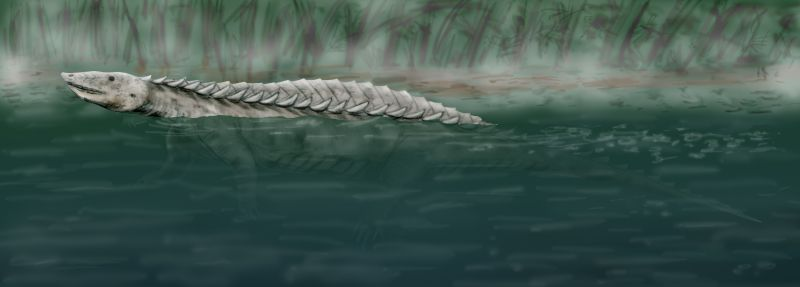 Longosuchus meadei (© N. Tamura)