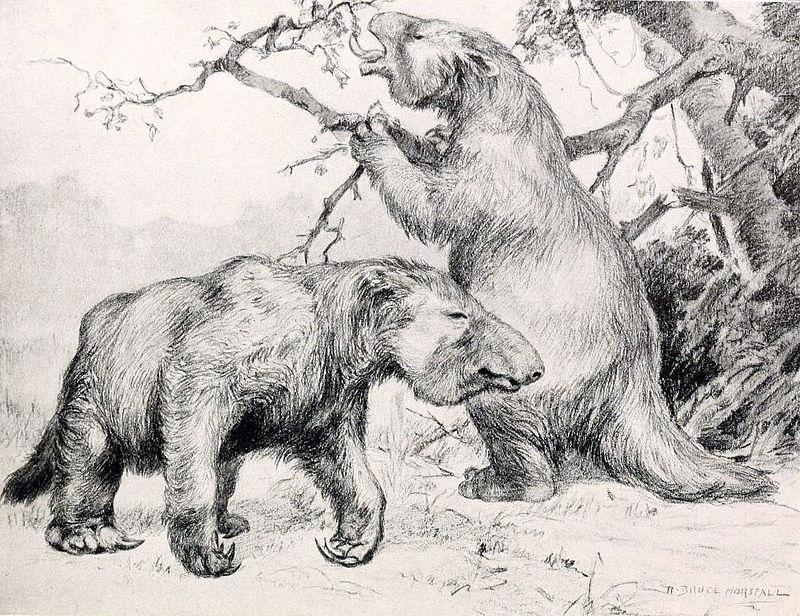 Megatherium americanum (Robert Bruce Horsfall)