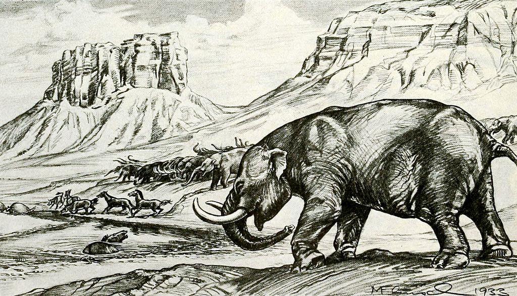 Stegomastodon mirificus (Margret Flinch)