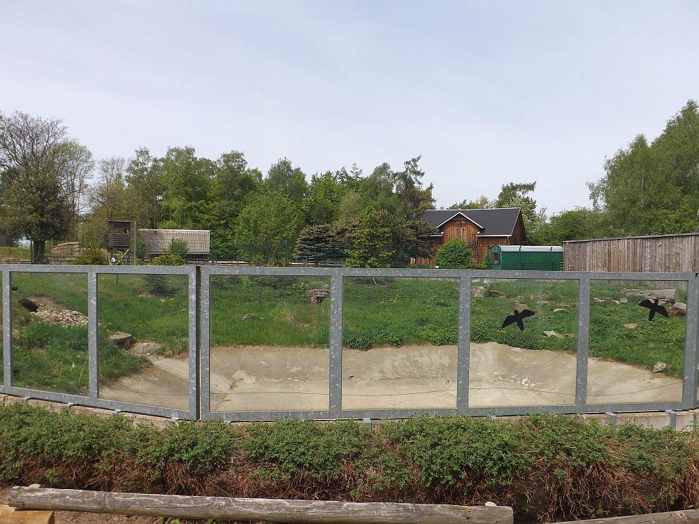 Braunbärenanlage (Tiergarten Falkenstein)